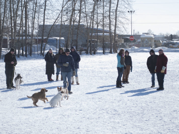 An afternoon at the Fairbanks Dog Park