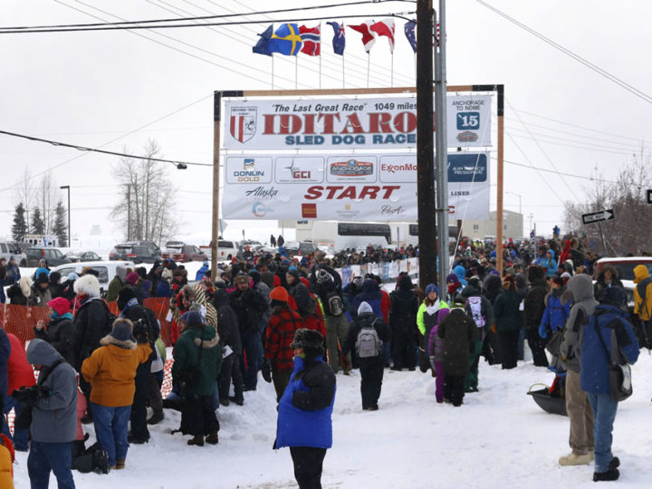 Iditarod 2015: Fairbanks Start in Photos
